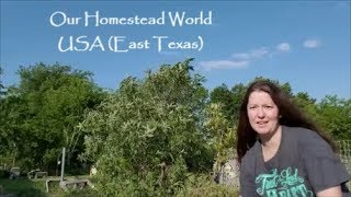 Our Homestead World - USA (East Texas)