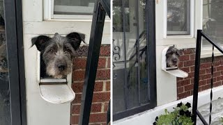 Dog Sticks His Head Out Of His Mailbox Every Morning To Greet His Neighbors