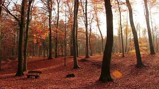 Autumn Forest & Relaxing Piano Music ~ Beautiful Falling Leaves 🍂 Autumn Aesthetic • 2 HOURS