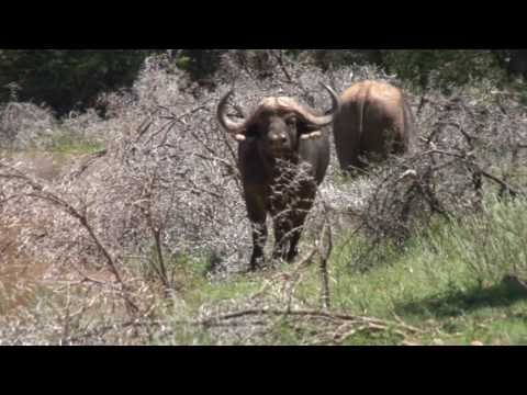 Roger Kenner - Kalahari Hunting 2014 - Part 2