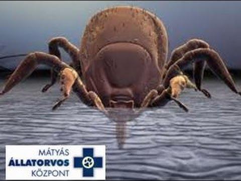 Giardia egyéb paraziták