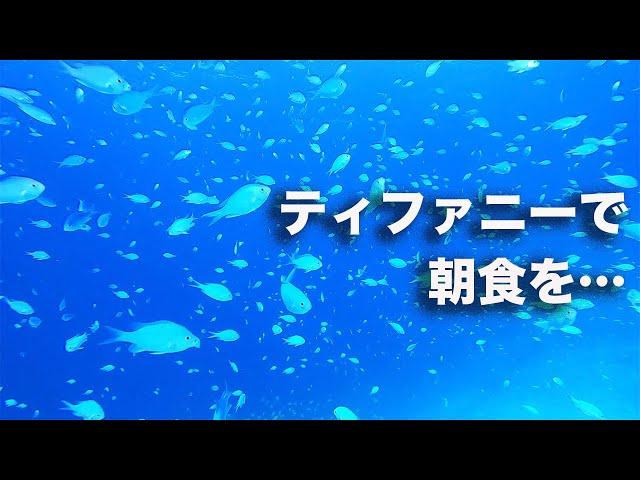 石垣島ダイビング ムーン・リバーを聴かせておくれ… ビーチライフ石垣島