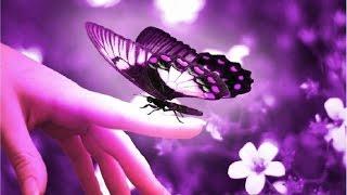 Die esoterische Bedeutung des Schmetterlings
