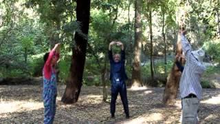 צ'י קונג ביער, בקסם או אפילו בבית
