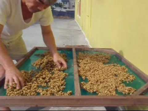 蜜處理咖啡(Honey Process Coffee) | 香港咖啡文化促進會