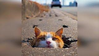 Смешные кошки 2019 Новые приколы с котами до слёз, смешные коты приколы 2019 funny cats #61