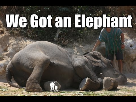 Elephant Farm, Street Food and Night Market in Chiang Mai Thailand