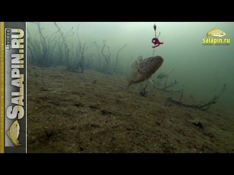 Ловля ротана (подводное видео) [salapinru]