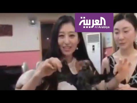 العرب اليوم - شاهد: ثورة على مذيعة صينية تناولت شوربة الخفاش مسبب الـ