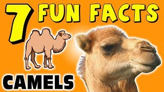 7 FUN FACTS ABOUT CAMELS! FACTS FOR KIDS! Camel! Sand! Desert! Learning Colors! Funny! Sock Puppet!