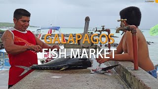 preview picture of video 'Fish marketplace in Puerto Ayora'