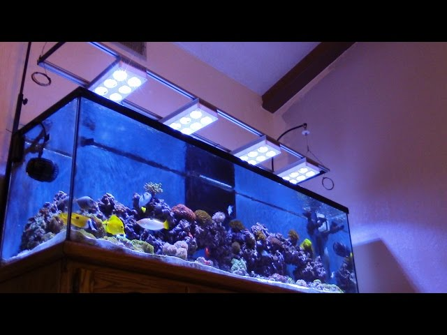 125G SALTWATER (ACUARIO MARINO) TIM's  AMAZING BEAUTIFUL CORAL REEF TANK UPDATE
