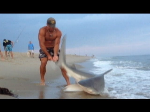 Man Wrestles Shark With Bare Hands: Caught on Tape | Good Morning America | ABC News