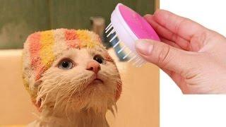 10 полезных товаров для котов с Алиэкспресса / Самые лучшие вещи с Алиэкспресса