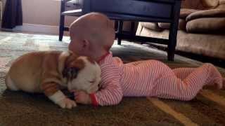 Bulldog Puppy Kissing The Baby