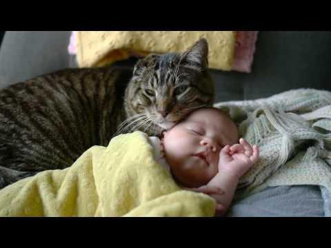 Anteprima Video Video di un gatto che accudisce un neonato di una delicatezza estrema...