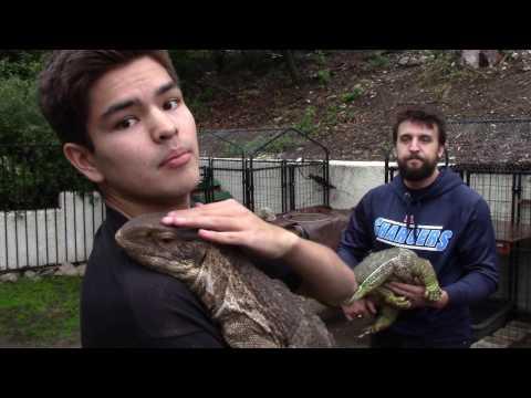 TES   S3E3 : MASSIVE Monitor Lizard Collection + Care Video!