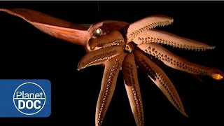 Kraken Project; In search of the Giant Squid | Full Documentaries - Planet Doc Full Documentaries