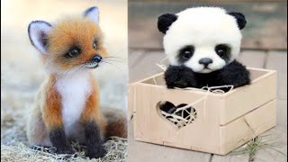 AW Animals SOO Cute! Cute baby animals Videos Compilation cute moment of the animals #2