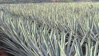 Elogio de la cocina mexicana - Cocina Potosina