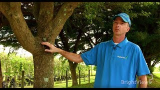 Why should I trim my trees and when is the best time to do it? | Ask BrightView