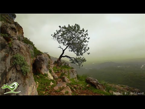 Instrumental Beautiful Music: Violin Music, Cello Music, Guitar Music, Flute Music, Piano Music