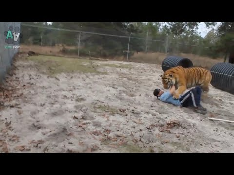 Cute and Funny Tiger Compilation