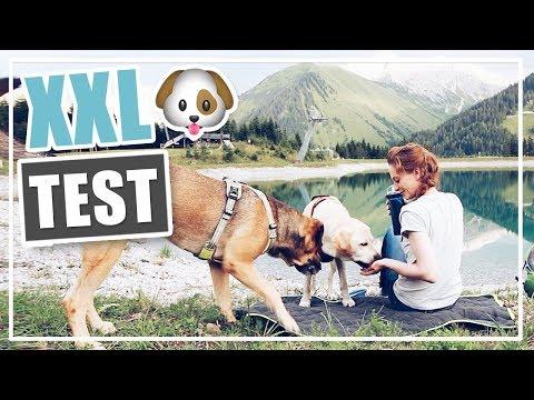 Neue HUNDE PRODUKTE von FRESSNAPF im LIVE TEST 🐶 XXL HAUL Dogs Creek Hundezubehör