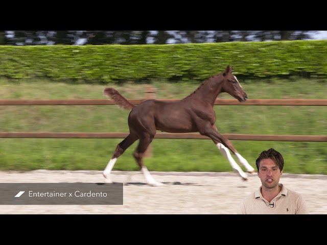 Puchachomalo d'n Hop (Entertainer x Cardento)