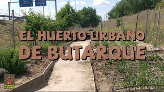 El huerto urbano de Butarque