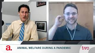 Animal Welfare During A Pandemic