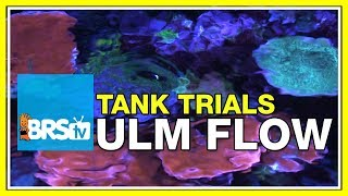 Creating The Best Flow With Ultra Low Maintenance Powerheads - BRStv Tank Trials Ep13