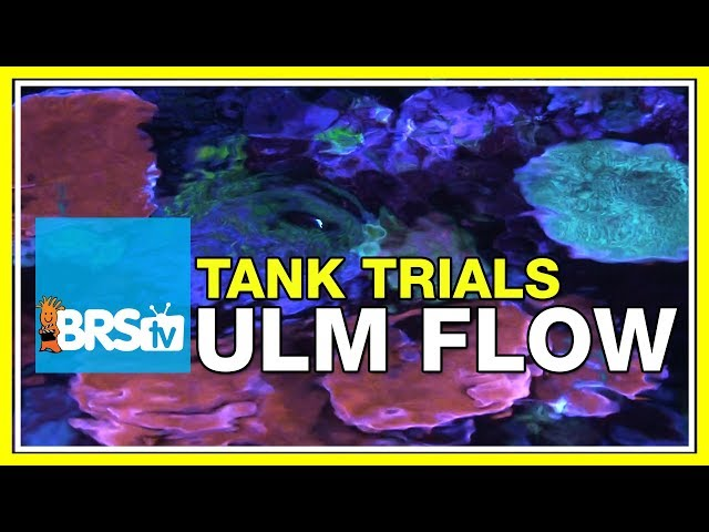 creating the best flow with ultra low maintenance powerheads brstv