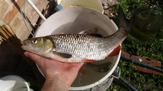 Рыбалка в старом осколе и губкине