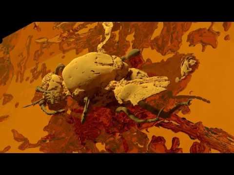 3D Scan einer bisher noch nie gesehenen Pheromondrüse einer  54 Mio Jahre alten Gnitze