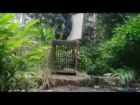 Cachorro-do-mato é resgatado e solto em Paraibuna