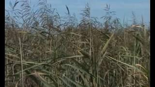 preview picture of video 'Biodiversität und das Neeracherried (MNG Polistage 2010)'