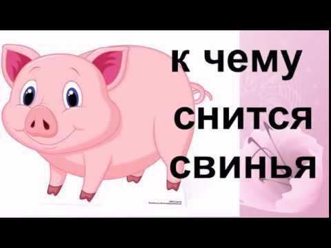 К чему снится свинья.Сонник от Ирины