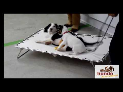 #Hundeklappliege  - www.hunde-klappliege.de Hundebett mobile Hundeliege
