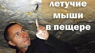 sochinenie-pro-letuchaya-mish-video