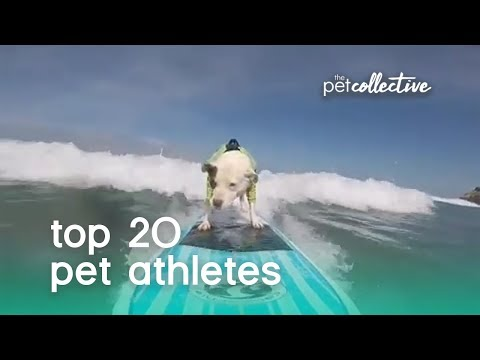 Best Pets of the Year: Top 20 Pet Athletes | The Pet Collective