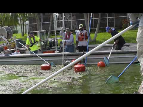 Cleaning Up Florida's Algae Crisis