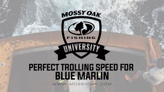 Perfect Trolling Speed for Blue Marlin