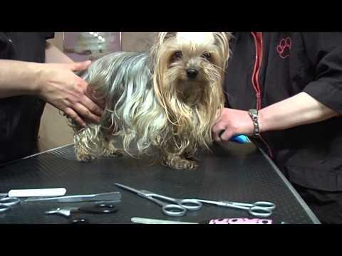 Luxus für Hunde, 10.4.15