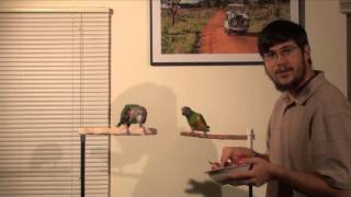 Parrots Eat Pomegranate for the First Time