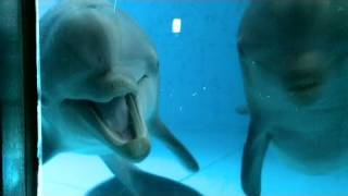 CNN: Dolphins see themselves in mirror