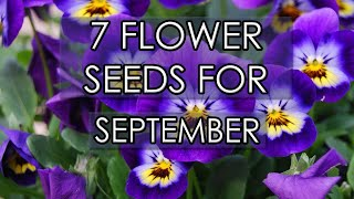 7 Flower Seeds For September 2020 | Sow Now For Spring Colour
