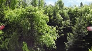 Dji fpv Raw forest flight