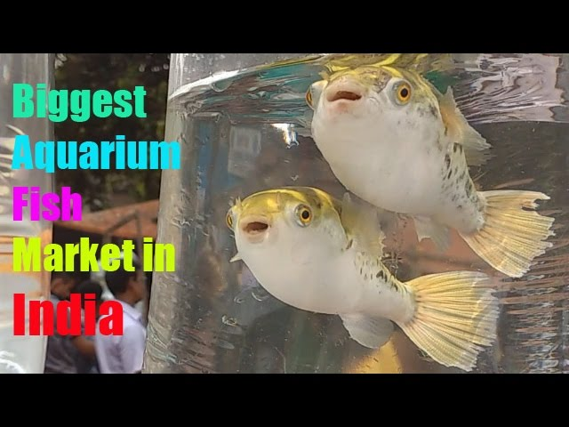 Biggest Aquarium Fish Market in India PART # 1