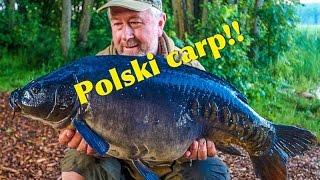 Polski Carp!!